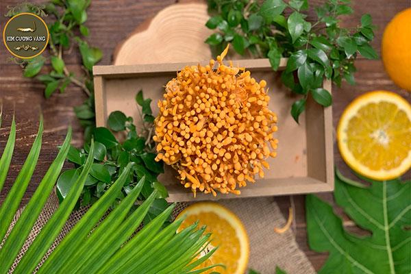 Đông trùng hạ thảo tươi có rất nhiều cách chế biến